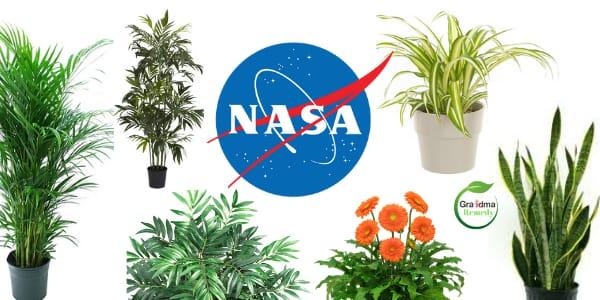 11-plants-that-purifies-air